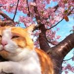 春到来。仙台泉中央ライブチャットアイシス・スタッフブログ
